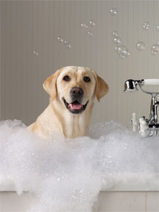 Dog Grooming Spa In Jupiter Fl Dogsworld