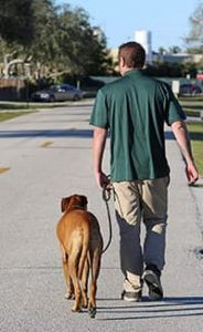 Trainer walking a dog