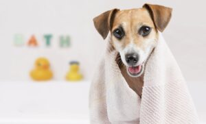 bath benefits for dogs