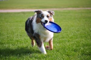customize-your-dogs-boarding-stay